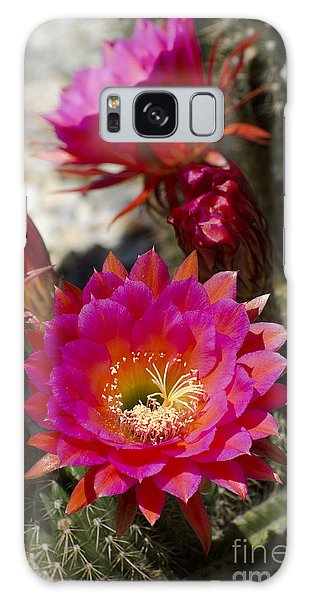 Pink Cactus Flowers Galaxy Case