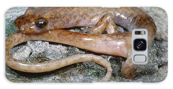 Cave Salamander Galaxy Case