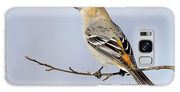 Female Pine Grosbeak Galaxy Case