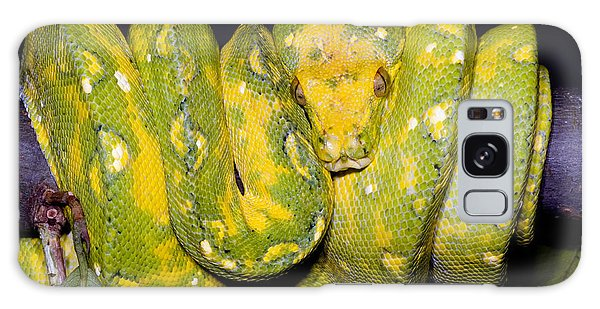 Green Tree Python Galaxy Case by Dante Fenolio