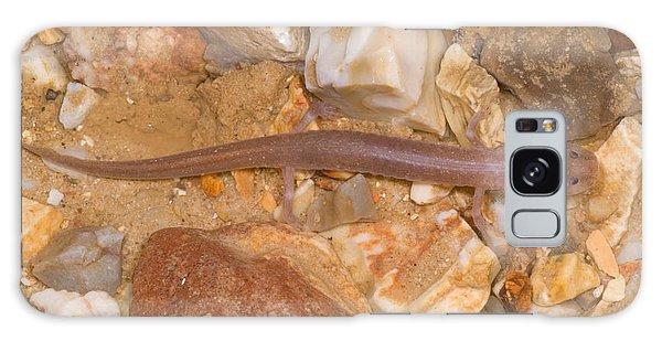 Ozark Blind Cave Salamander Galaxy Case