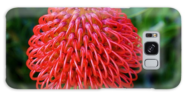 Common Pincushion Protea Galaxy Case by Werner Lehmann