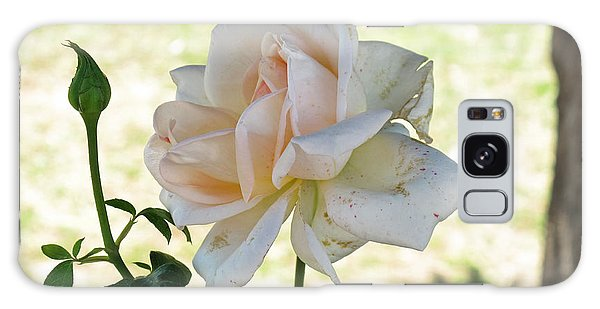 A Beautiful White And Light Pink Rose Along With A Bud Galaxy Case by Ashish Agarwal
