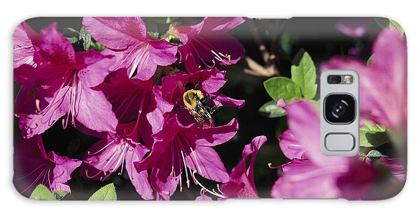 Brookside Gardens Galaxy Case - A Bee Gathers Pollen From A Beautiful by Nadia M.B. Hughes