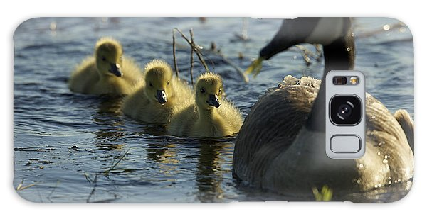 Gosling Galaxy Case - A Canada Goose Branta Canadensis Family by Tim Laman