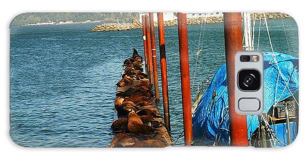 Swan Boats Galaxy Case - A Dock Of Sea Lions by Jeff Swan