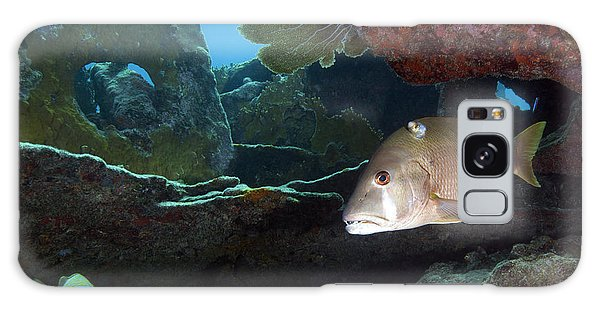 Mangrove Snapper Galaxy Case - A Gray Snapper Swims by Terry Moore