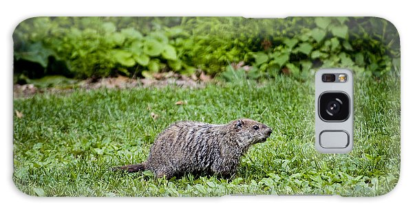 Groundhog Galaxy Case - A Groundhog Marmota Monax Enjoys A Meal by Stephen St. John