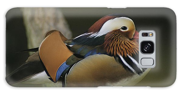People's Republic Of China Galaxy Case - A Portrait Of A Mandarin Duck by Tim Laman