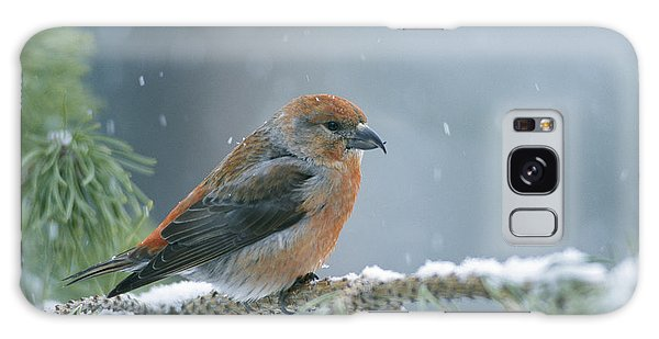 A Red Crossbill Loxia Curvirostra Galaxy S8 Case
