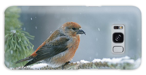 A Red Crossbill Loxia Curvirostra Galaxy Case
