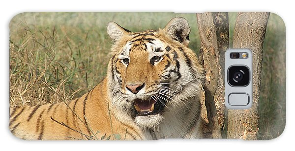 A Tiger Lying Casually But Fully Alert Galaxy Case