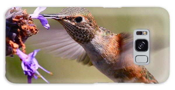 Allen's Hummingbird Galaxy Case