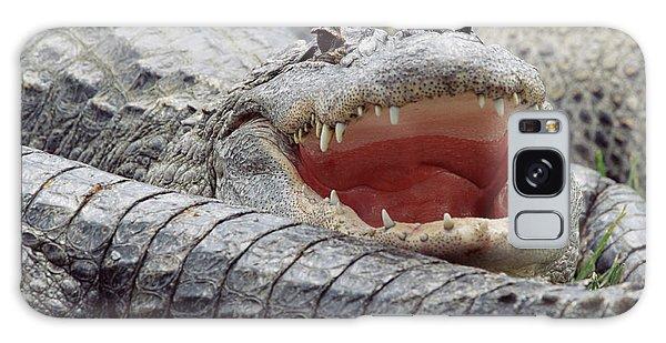 American Alligator Alligator Galaxy Case by Tim Fitzharris