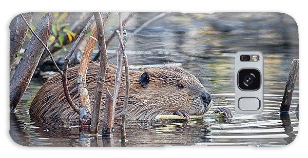 American Beaver Galaxy Case