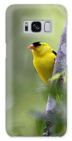 American Goldfinch - Peaceful Galaxy Case