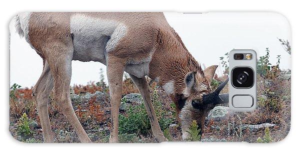 Antelope Grazing Galaxy Case by Art Whitton