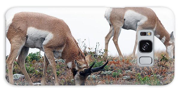 Antelopes Grazing Galaxy Case by Art Whitton