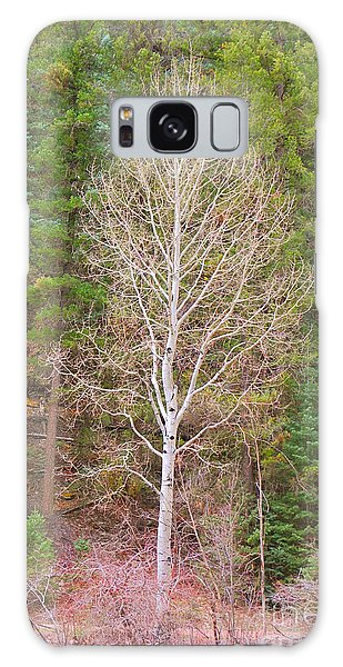 Aspen Tree Forest Road 249 Galaxy Case by Donna Greene