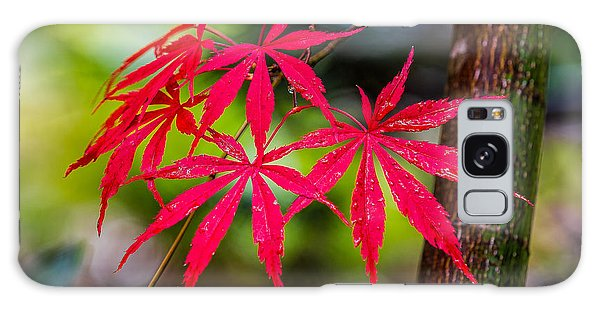 Autumn Japanese Maple Galaxy Case by Ken Stanback
