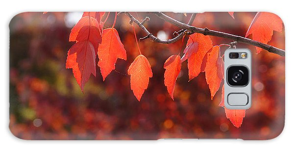 Autumn Leaves In Medford Galaxy Case by Mick Anderson
