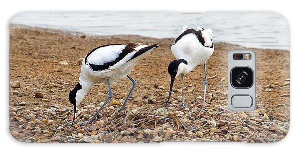 Avocets At Nest Galaxy Case