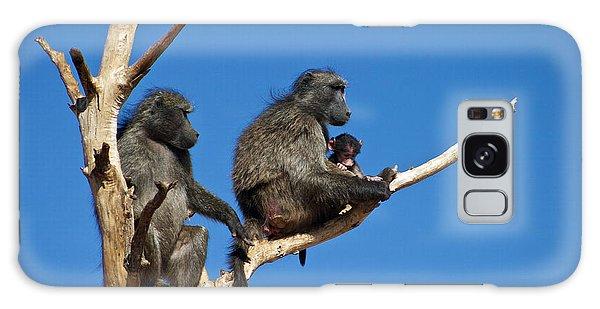 Baboon Family Namibia Galaxy Case