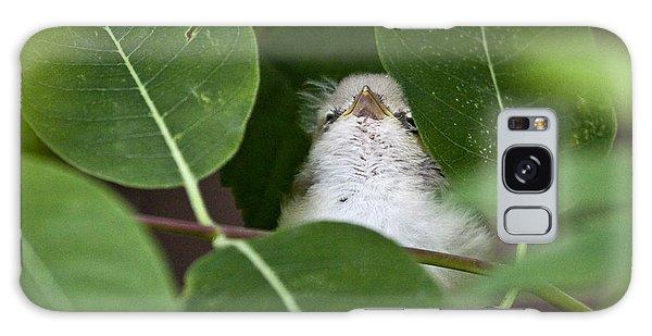 Baby Bird Peeping In The Bushes Galaxy Case by Jeannette Hunt