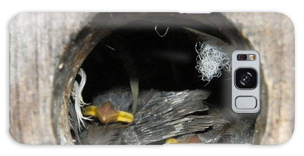 Baby Birds Galaxy Case