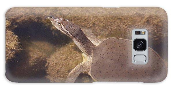 Baby Turtle Galaxy Case
