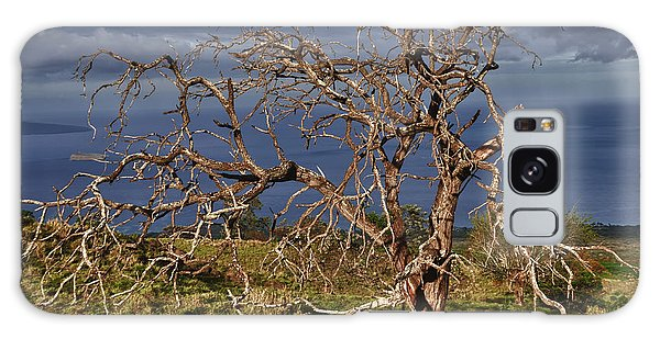 Bare Tree In Hana Maui Galaxy Case by Loriannah Hespe