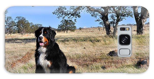 Bernese Mountain Dog In California Chaparral Galaxy Case
