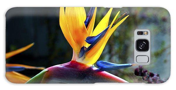 Bird Of Paradise Galaxy Case