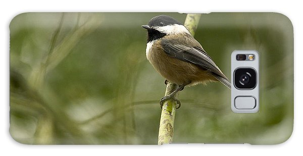 Black-capped Chickadee With Branch Bokeh Galaxy Case by Sharon Talson