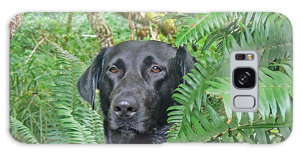 Black Dog In The Ferns Galaxy Case by Pamela Patch