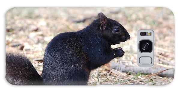 Black Squirrel Of Central Park Galaxy Case