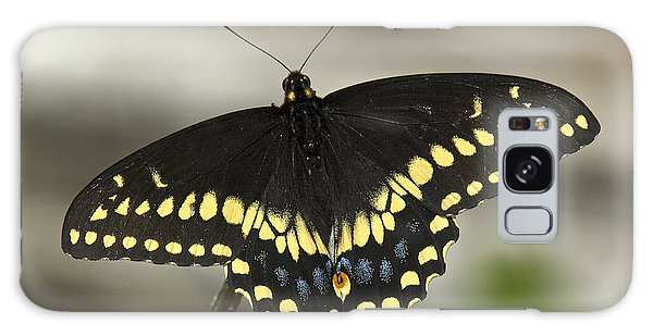 Black Swallowtail Din103 Galaxy Case