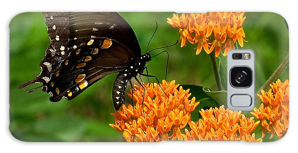 Black Swallowtail Visiting Butterfly Weed Din012 Galaxy Case by Gerry Gantt