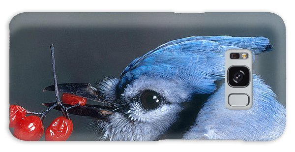 Blue Jay Galaxy Case by Photo Researchers, Inc.