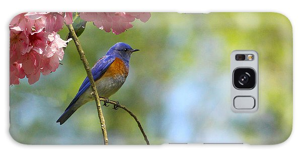 Bluebird In Cherry Tree Galaxy Case
