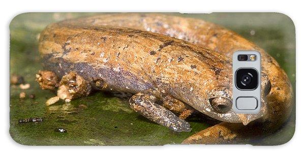 Bolitoglossine Salamander Galaxy Case
