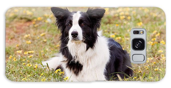 Border Collie In Field Of Yellow Flowers Galaxy Case