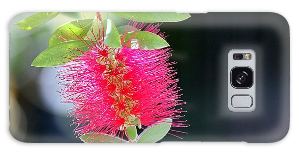 Bottlebrush Nectar Galaxy Case