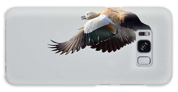 Brahminy Shelduck Galaxy Case by Fotosas Photography