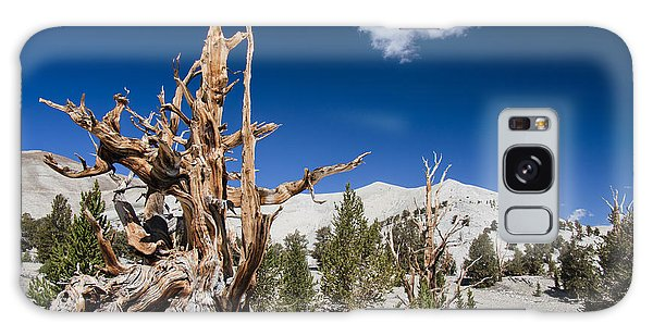 Bristlecone Pine - Pinus Longaeva Galaxy Case
