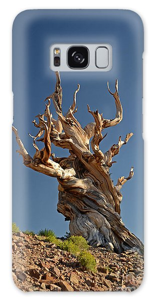 Bristlecone Pine Galaxy Case