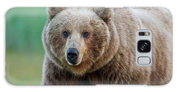 Brown Bear  Galaxy Case