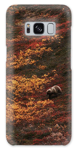 Brown Bear Denali National Park Galaxy Case