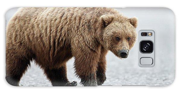 Brown Bear Stare Galaxy Case