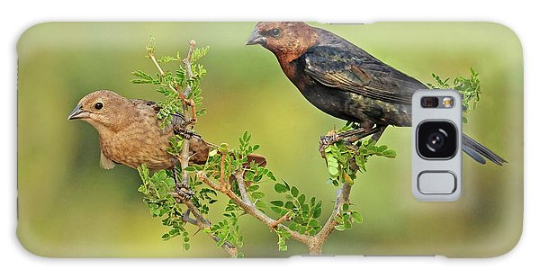 Brown Headed Cowbird Pair Galaxy Case